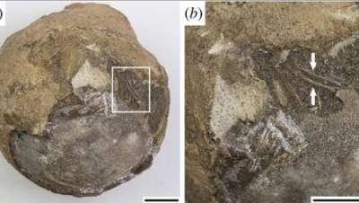 Ученые нашли эмбрион черепахи возрастом более 70 миллионов лет